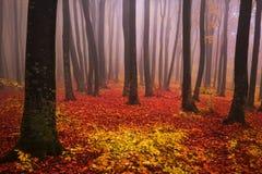 足迹低谷有雾的秋天森林 免版税图库摄影