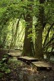 足迹在一个绿色森林里 库存图片