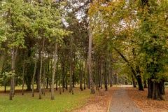 足迹在公园在秋天 库存图片