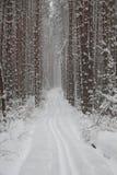 足迹在冬天多雪的森林里 免版税库存照片
