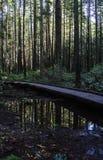 足迹在和平的精神公园 库存照片