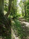 足迹在夏天森林里 库存照片