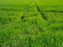 足迹在导致天际的一个绿色草甸 库存图片