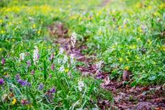 足迹在春天flowers_中的森林里 免版税库存图片