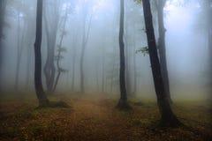 足迹在有雾的森林里 库存图片