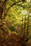 足迹在森林里在秋天 免版税库存照片