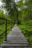 足迹在森林里 库存照片