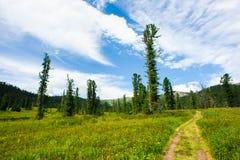 足迹在森林里 免版税库存图片