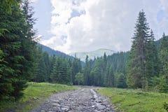足迹在森林 免版税库存图片