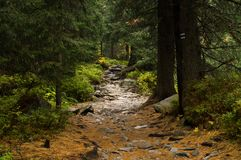 足迹在森林Tatransky narodny公园 tatry vysoke 斯洛伐克 免版税图库摄影