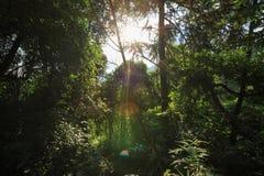 足迹在热带绿色森林里 免版税图库摄影