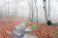 足迹在秋天的有雾的森林里 库存图片