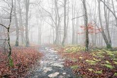 足迹在秋天的有雾的森林里 免版税库存图片