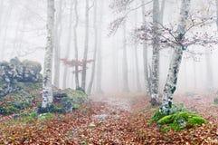 足迹在秋天的有雾的森林里 图库摄影