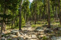 足迹在科罗拉多森林里 免版税库存照片