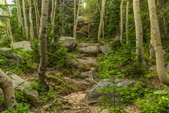 足迹在科罗拉多森林里 库存图片