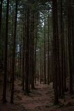 足迹在黑暗的森林里 免版税库存图片