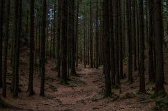 足迹在黑暗的森林里 库存图片