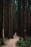 足迹在黑暗的森林里 免版税图库摄影