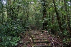 足迹在Monteverde森林里 免版税库存照片