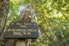 足迹标志之后沿高大的树木足迹 免版税库存照片
