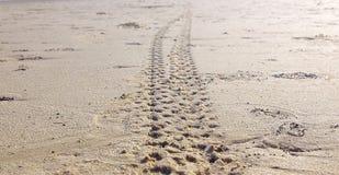 足迹海滩 免版税图库摄影