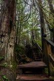 足迹的楼梯部分对大篷车盖子,温哥华岛,加拿大的 免版税库存图片