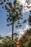 足迹看法与人的在Horto的Florestal杉木森林,在坎波斯附近做Jordão 免版税图库摄影
