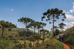 足迹看法与人的在Horto的Florestal杉木森林,在坎波斯附近做Jordão 库存图片