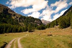 从足迹看见的高山谷。远足在瑞士阿尔卑斯 免版税库存照片