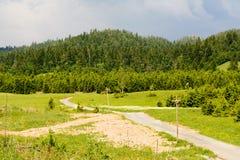 足迹通过一个杉木森林在克罗地亚 图库摄影