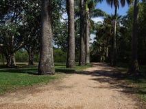 足迹通过一个热带公园 库存照片