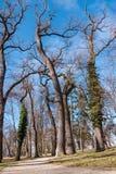 足迹通过公园 图库摄影