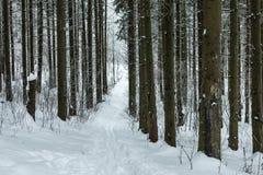 足迹通过冬天森林 库存图片