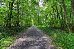 足迹通过森林 库存照片