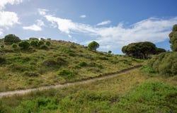 足迹通过沿海植物群 免版税库存图片
