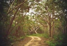 足迹通过澳大利亚森林 免版税库存照片