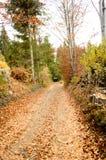 足迹通过秋天森林 库存图片