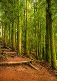足迹通过豪华的绿色森林在七个城市 免版税图库摄影