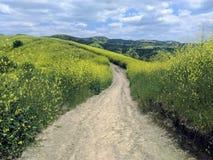 足迹通过高野花和小山 免版税库存图片