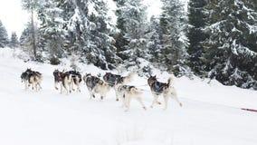 足迹雪撬爱斯基摩种族 免版税库存照片