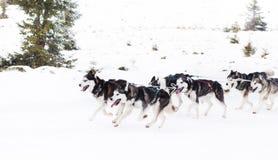 足迹雪撬爱斯基摩种族 库存照片
