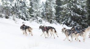 足迹雪撬爱斯基摩种族 免版税库存图片
