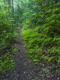 足迹, Greenbrier,大烟山国家公园, TN 免版税图库摄影