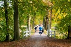 活跃人民乘坐的自行车在森林在秋天,荷兰 库存照片