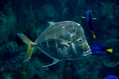 跌价的鱼 免版税图库摄影
