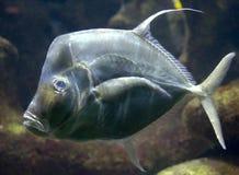跌价1条的鱼 免版税库存照片