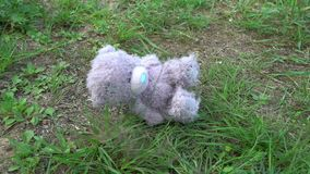 跌倒在草,寂寞概念,童年,乡情记忆的Abandonded长毛绒玩具灰色玩具熊  股票录像