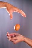 跌倒鸡的鸡蛋 信任和信心概念 库存照片