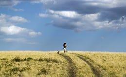 跑与在乡下公路的一条狗的女孩在夏天自然 库存照片